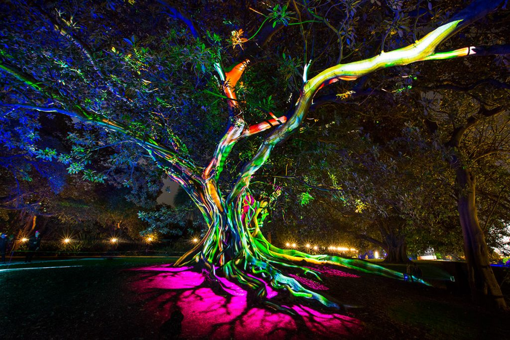 Vivid Sydney 2016 - Synthesis at the Royal Botanic Garden by Destination NSW
